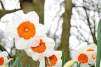 bloom-283020_1920