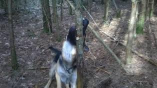 FM Jeck skogsavverkning bild 4 28 mars