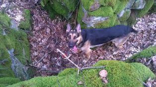 FM Jeck skogsavverkning bild 8 28 mars