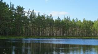 Tivedstrollen skogstjärn i sommarskrud 4