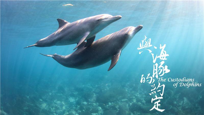 《與海豚的約定》:海豚的美麗與哀傷 – FENG