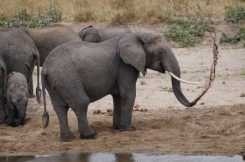Elephant splash.