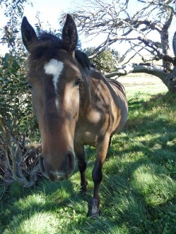A very close encounter with a very tame brumy in the Victorian High Country, Falls Creek
