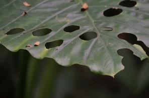 Leaf, Cat Ba National Park