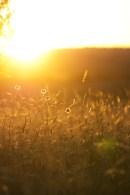 Sunset grasses, Currango