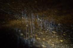Starlight glowworms
