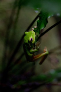 Frog in Tiger Snake Canyon 2