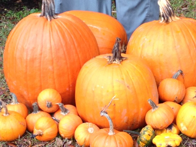Last year's pumpkins