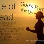 Bite of Bread: God's Purpose for Us
