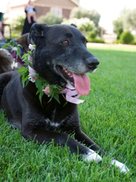 Blossom, a black mixed-breed dog, wearing a flower collar