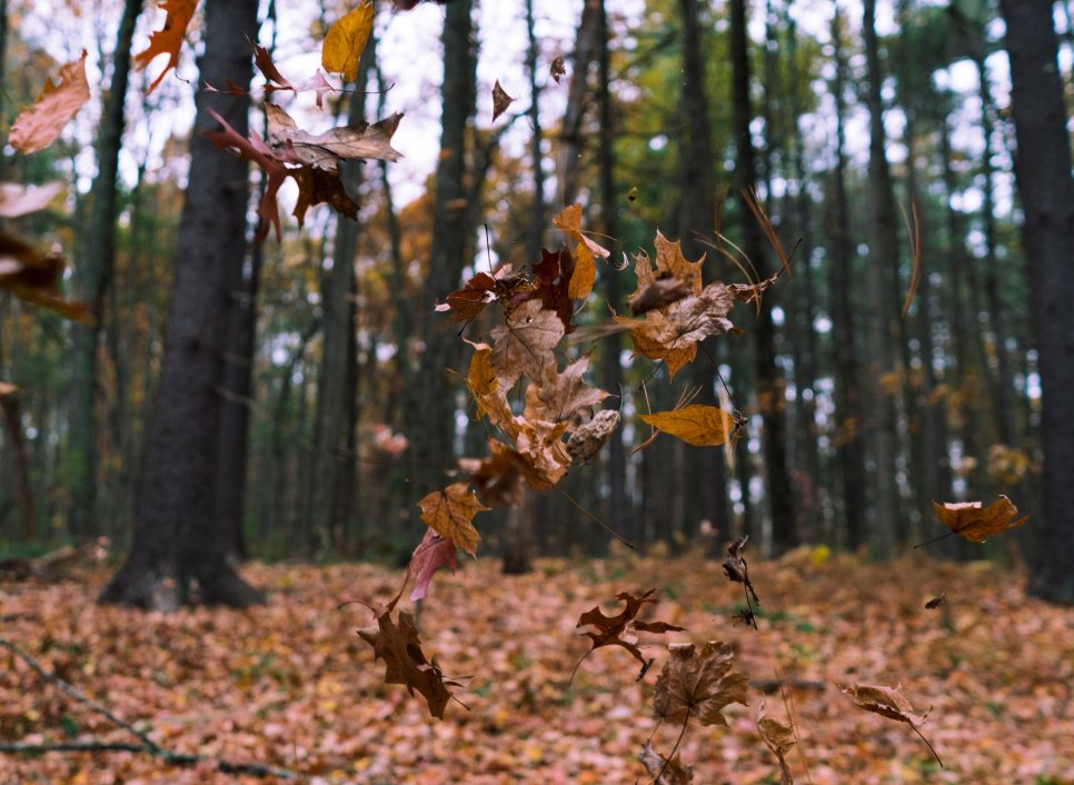 Fall leaves dancing in the wind