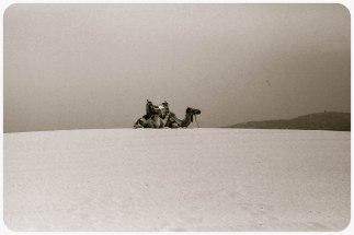 Camel on beach, Tangier - Erin J. Bernard