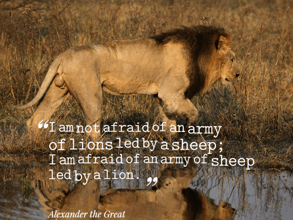 I am not afraid of an army of lions led by a sheep; I am afraid of an army of sheep led by a lion . - Alexander the Great