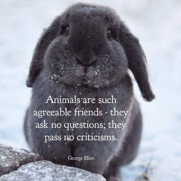 Animals are such agreeable friends, they ask no questions; they pass no criticisms. - George Eliot