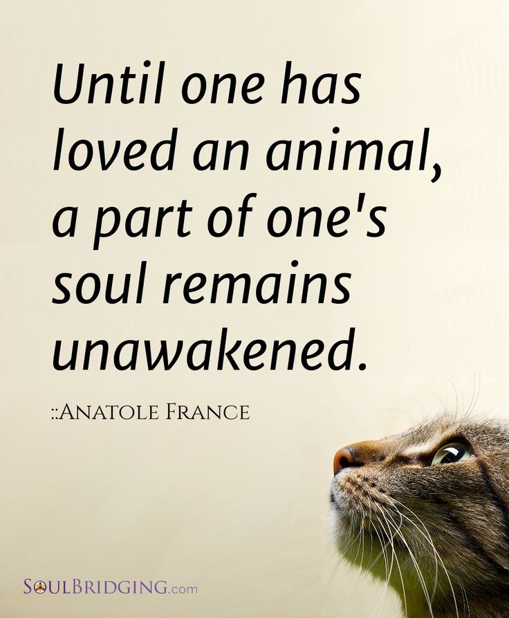 Until one has loved an animal, a part of one's soul remains unawakened. - Anatole France