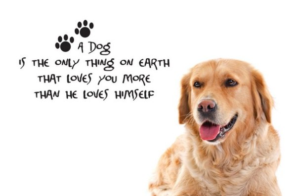 52 Funny Dog Quotes with Images - Word Porn Quotes, Love