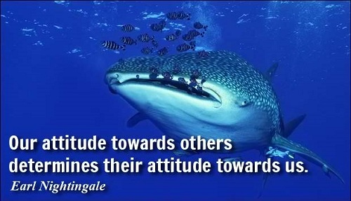 Cool Quotes on Attitude
