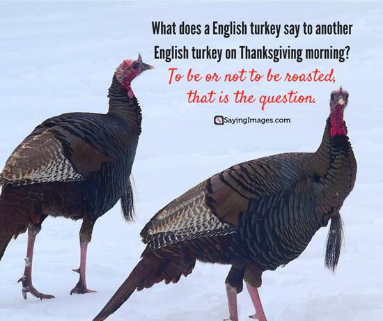 turkey jokes funny