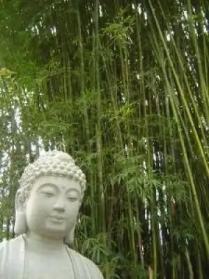 Buddha_statue_asia_224789_l