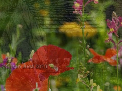 Double exposure poppies and ruin
