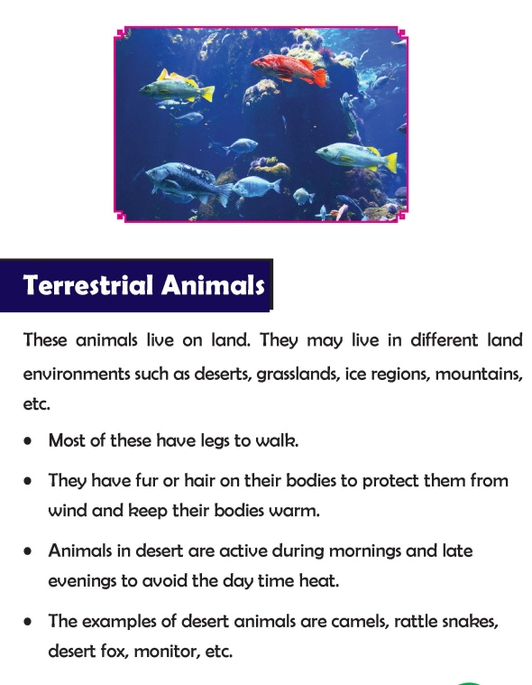 Grade 3 Science Lesson 2 Animal Habitat And Food Habits