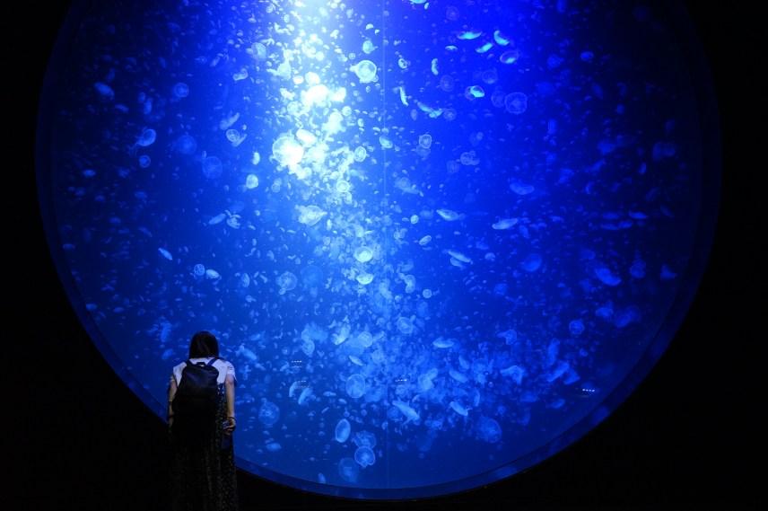 加茂水族館、クラゲ