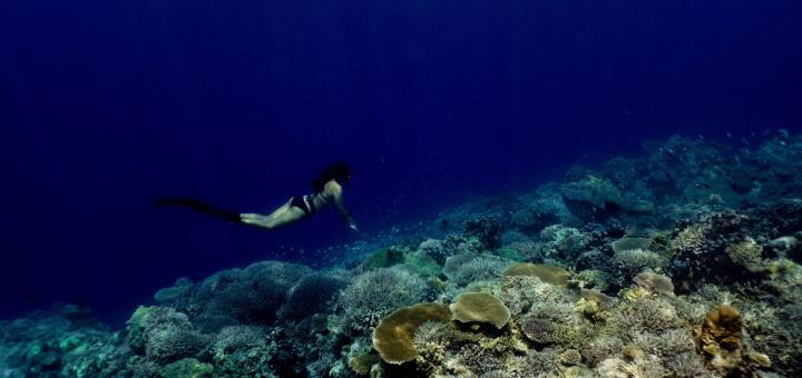 Apo Reef, Occidental Mindoro