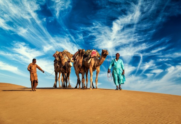 two Indian cameleers (camel drivers) with camels in dunes of Thar desert.