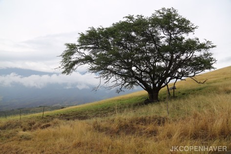 Maui landscape