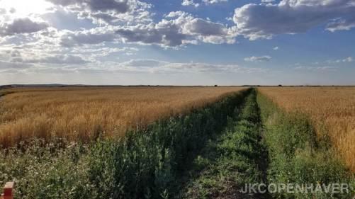 American Farmland