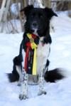 prishund