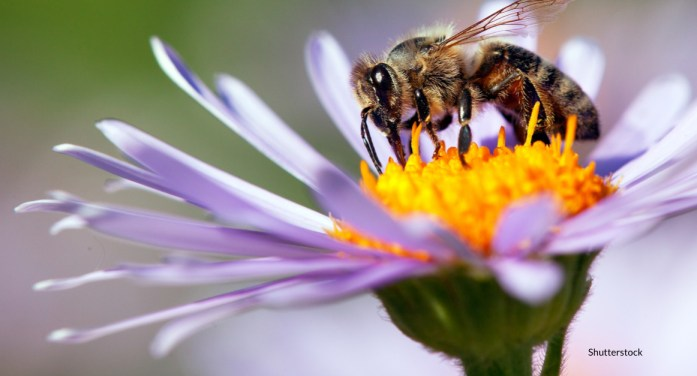 Intensive Agriculture, Pesticides and Climate Change Causing Global Insect Decline