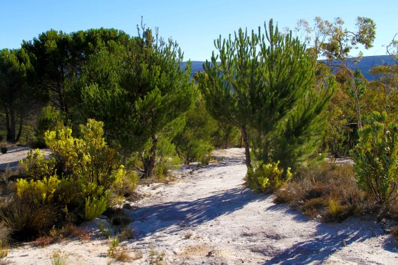 From fynbos to a complete different landscape