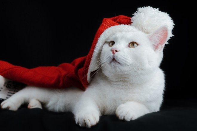 cat, hat, christmas