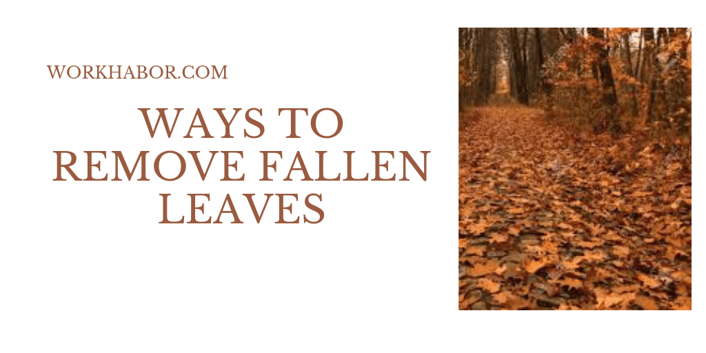 Ways To Remove Fallen Leaves From Your Yard