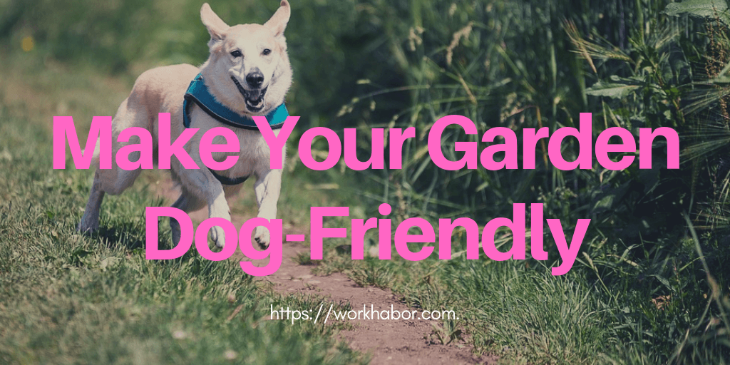 Top 7 Tips To Make Your Garden Dog-friendly