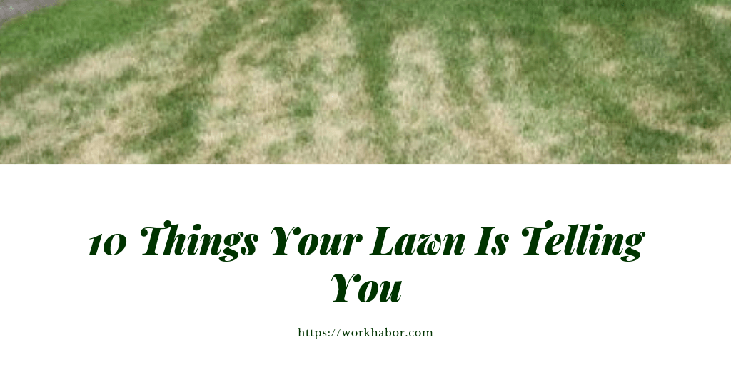 10 Things Your Lawn Is Telling You
