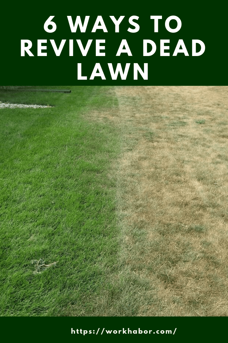how to revive a dead lawn