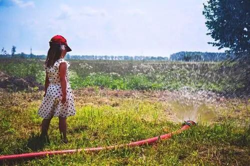 Will Watering Dead Grass Bring It Back?