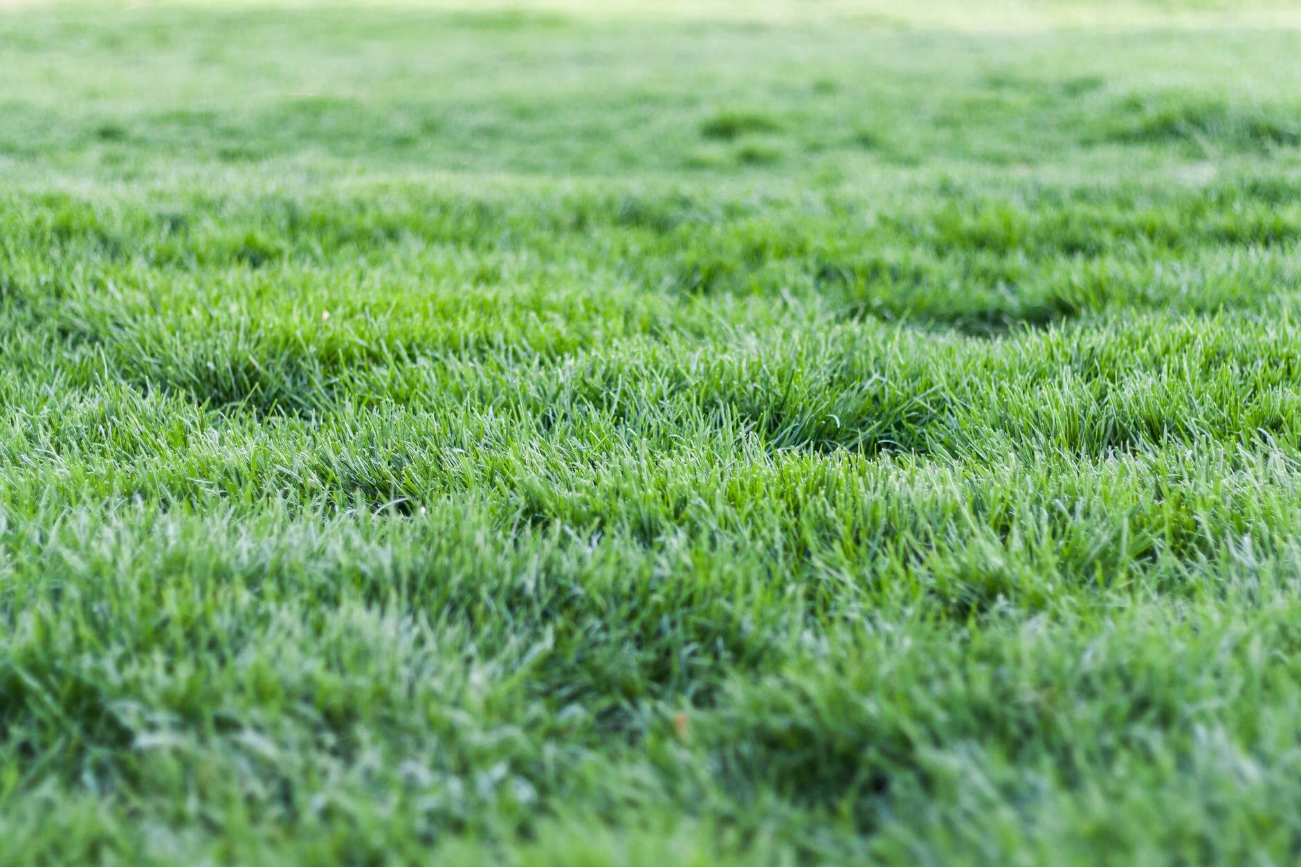 12 Tips To Keep Your Lawn Green This Summer