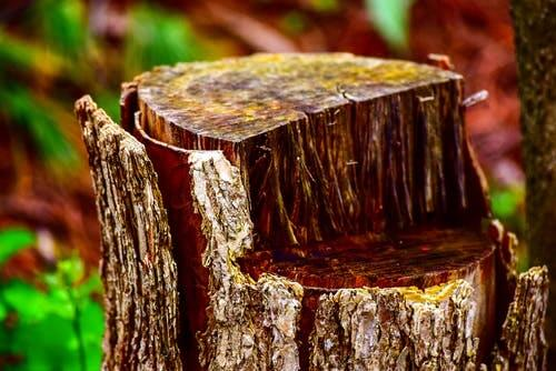 How To Preserve A Tree Stump You Want To Use