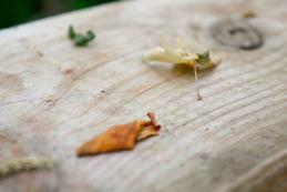 Leaves on Wood