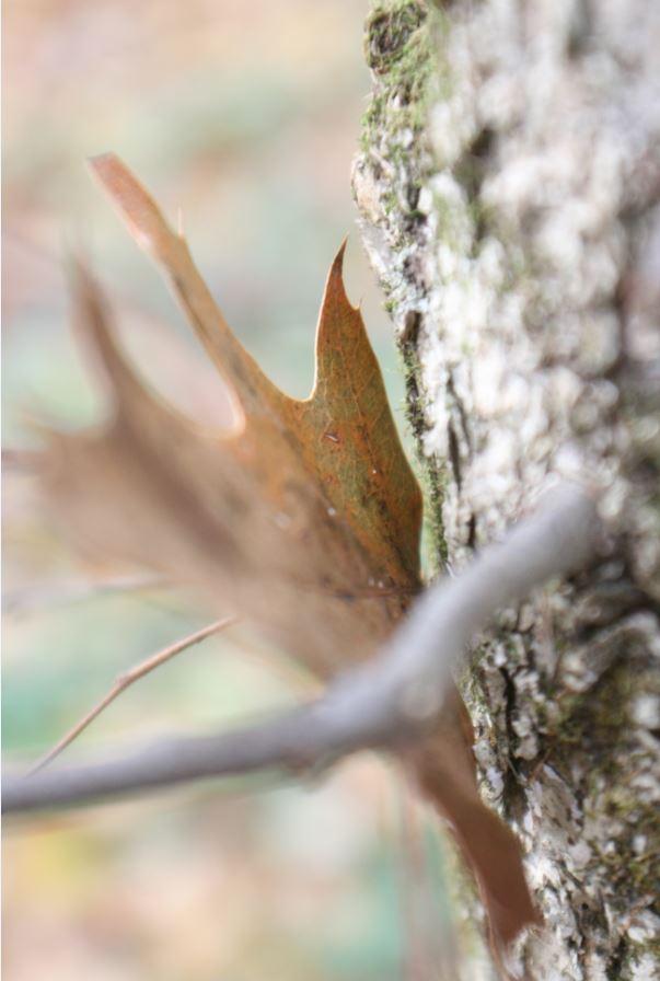 Brown Leaf Against Tree Bark