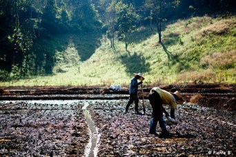 Pierre b film photo thailande