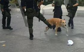 cop kicking Loukanikos