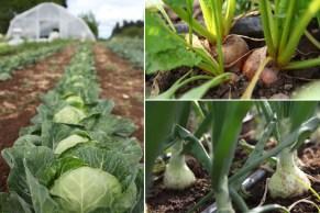 veggies5