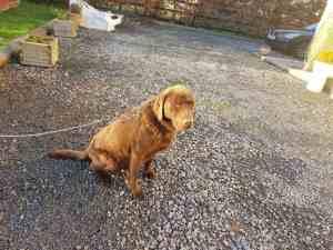 How I found a dog groomer via Facebook