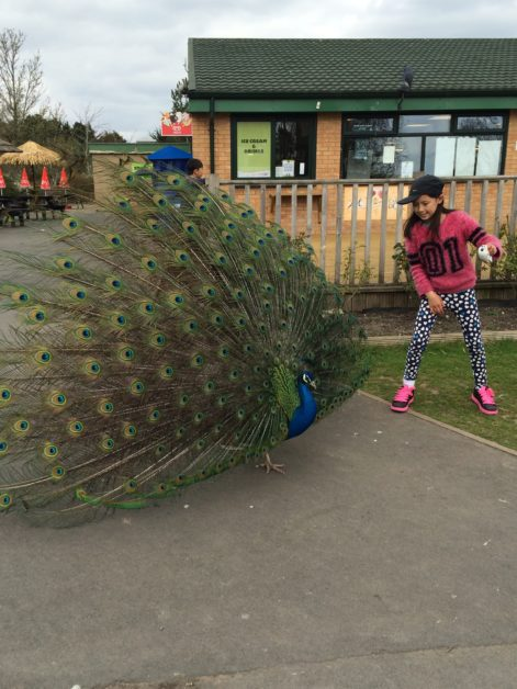 Animals from Blackpool Zoo