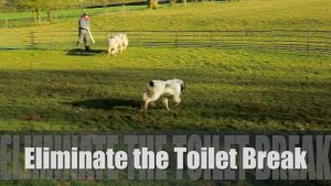 Teach your dog to toilet on command