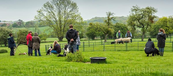 Students and their dogs watching a sheepdog training course